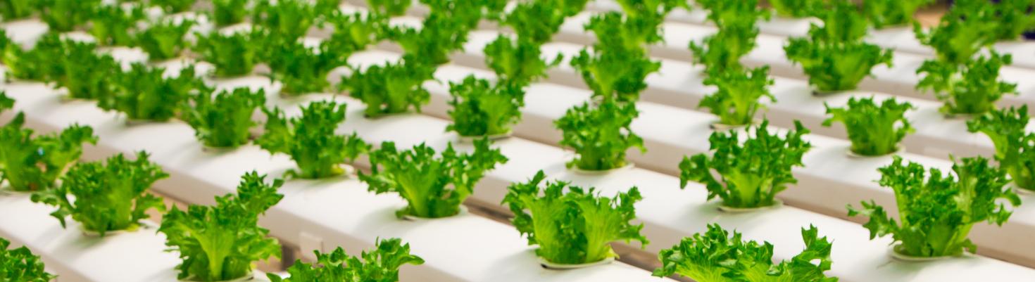 Cultivo interior con led paso a paso blog for Cultivo interior casero