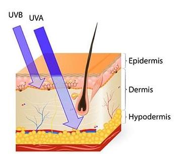 Pénétration des rayons UVA dans la peau