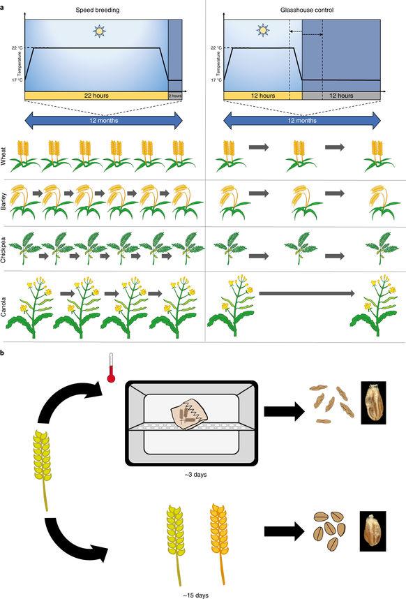 cultivos de crecimiento rapido